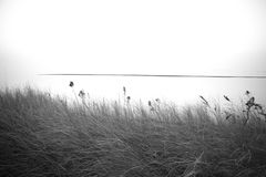 Wild grass Royalty Free Stock Images