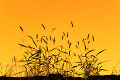 Free Wild Grass Royalty Free Stock Photo - 22256305