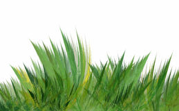 Wild grass Royalty Free Stock Image