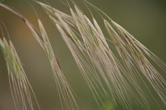 Wild grass. A background of wild grass Stock Images