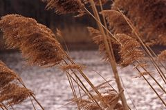 Wild Grass. Exotic wild grass in wetland Royalty Free Stock Photo