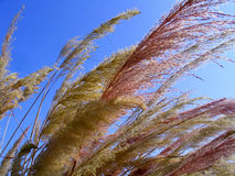 Wild Grass. Blown by a Spring Wind stock photos