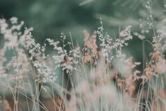 Wild grass Royalty Free Stock Photos