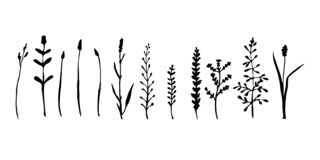 Free Wild Grass And Herbs Collection. Hand Drawing Of Meadow Herbs Or Field Plants. Black Contour Isolated On White. Vector Royalty Free Stock Images - 172925589