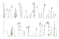 Free Wild Grass And Herbs Monochrome Botanical Collection Of Brushes For Illustrator. Field And Meadow Decorative Elements. Royalty Free Stock Photo - 177670165