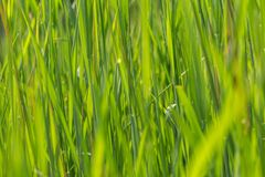 Wild grass background Stock Image
