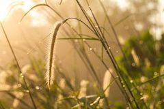Wild Grass background Stock Photos