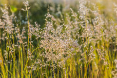 Wild Grass Stock Photos