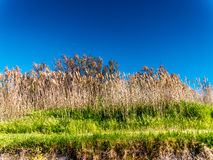 Wild grass on the beach in Tuscany Stock Photos