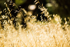 Wild grass being blown in the wind Royalty Free Stock Photos