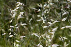 Wild grass. Blowing in a breeze Royalty Free Stock Images