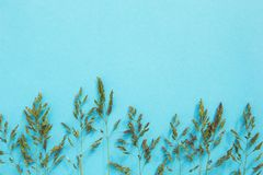 Wild grass on a blue background, minimalism. Space for text royalty free stock image