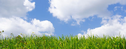 Wild grass and blue sky. Banner Stock Photos