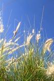 Wild grass on the blue Sky Stock Photos