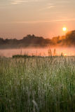 Wild grass by a bog. Grass grows wildly by a bog with the sun rising in the background stock image