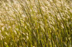 Wild grass in bright sunset Stock Photos