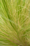Wild grass. Closeup in outdoor setting Royalty Free Stock Image