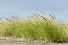 Wild grass on concrete Stock Images