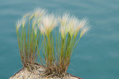Wild grass on a deserted pier Royalty Free Stock Photography