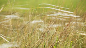 Wild grass in the field waving on wind - closeup stock video footage