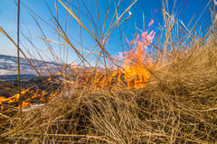 Wild grass on fire Royalty Free Stock Images