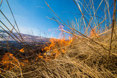 Wild grass on fire Stock Images