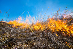 Wild grass on fire Royalty Free Stock Image