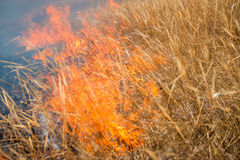 Wild grass on fire Royalty Free Stock Photography