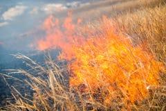 Wild grass on fire Stock Image