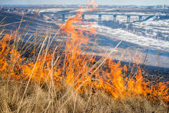 Wild grass on fire Royalty Free Stock Photo