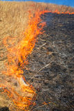 Wild grass on fire. Close up photo Stock Photography
