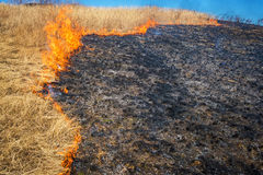 Wild grass on fire. Close up photo Royalty Free Stock Photo