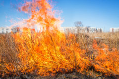 Wild grass on fire Stock Photos