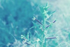 Wild grass flower with blue color filter efect. Relax nature wallpaper background royalty free stock photography