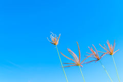 Wild grass flowers in blue sky. Background Royalty Free Stock Photography