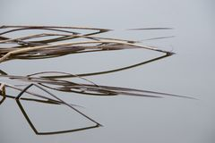 Dried up wild grass in water stock image