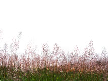 Wild grass flowers meadow. With water drop after raining Royalty Free Stock Images