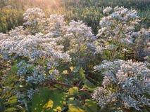 Wild prairie flowers. Wild grass flowers in prairie fields in Midwest Stock Photo