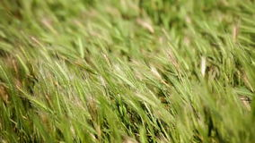 Wild grass and flowers waving on strong wind in field stock footage
