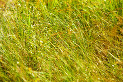 Wild grass Stock Photo
