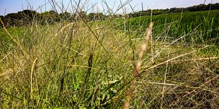 Wild grass in the galleys royalty free stock images