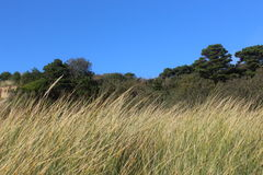 Wild grass green trees and blue sky as background. This is a view of historic new port beach site ai Newport Oregon royalty free stock images