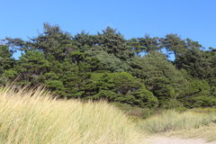 Wild grass green trees and blue sky as background. This is a view of historic new port beach site ai Newport Oregon stock image