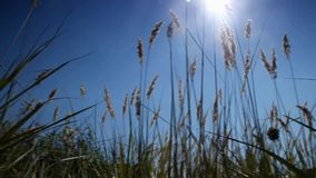 Wild grass growing stock video footage