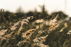 Wild grass growing in nature Royalty Free Stock Images