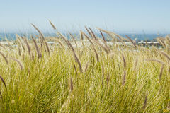 Wild grass and industry Royalty Free Stock Image