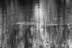 Wild grass on lake of monochrome tone Royalty Free Stock Photos