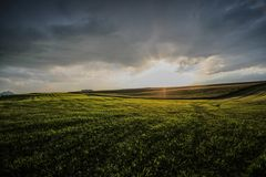 Endless grassfield. Wild grass land black cloud and sun light at soth area of germany royalty free stock images