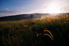 Wild grass on light mist in the mountain sunset background Royalty Free Stock Photo