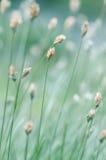 Wild grass Stock Image